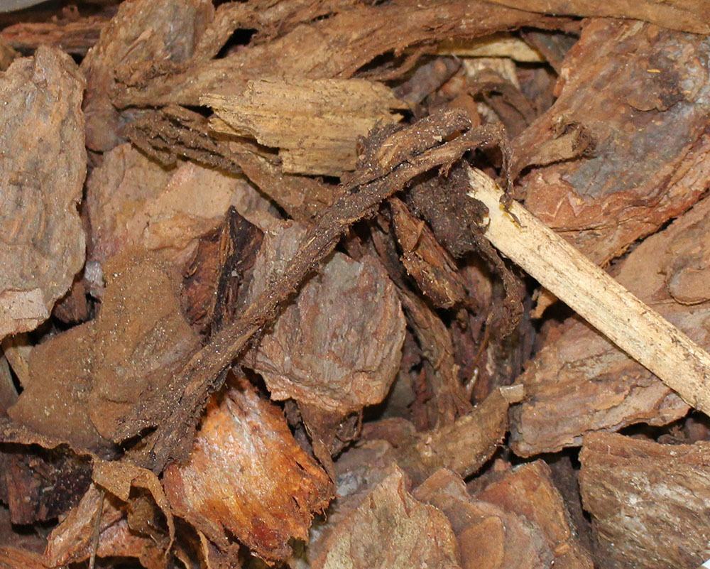 Bag Mulch Pine Bark Mini Nuggest.JPG